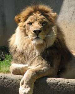 noble-animal